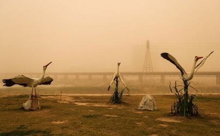 غلظت گرد و غبار اهواز به 47 برابر حد مجاز رسید