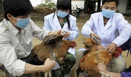 آشنایی با ویروس آنفلوانزای پرندگان H۵N۶