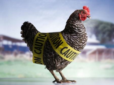 آشنایی با شیوه های پیشگیری از آنفلوانزای پرندگان