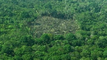 کاهش ۱۳ درصدی جنگل زدایی در آمازون
