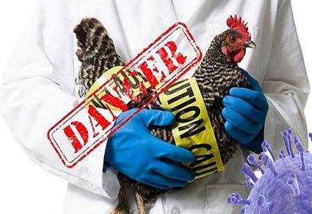 هشدار به گیلانی ها؛ مشاهده آنفلوآنزای فوق حاد پرندگان در کیاشهر