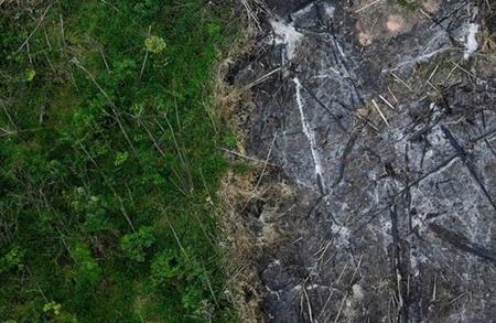 نگرانی از تصویب قانون جاده سازی در جنگل های بکر آمازون