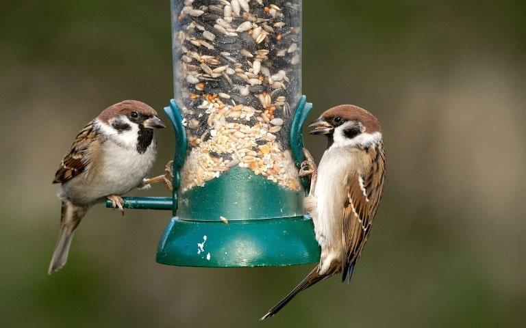 آیا ظروف تغذیه پرندگان حیات وحش را تهدید میکند؟