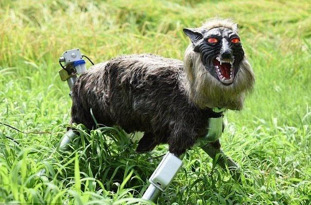 گرگ روباتیک از مزرعه ژاپنیها محافظت میکند