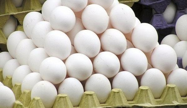 آنفلوآنزای حاد پرندگان مهار شد | ادامه روند کاهش قیمت تخم مرغ