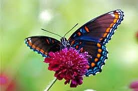 پروانهها در آغاز با گل رفیق نبودند