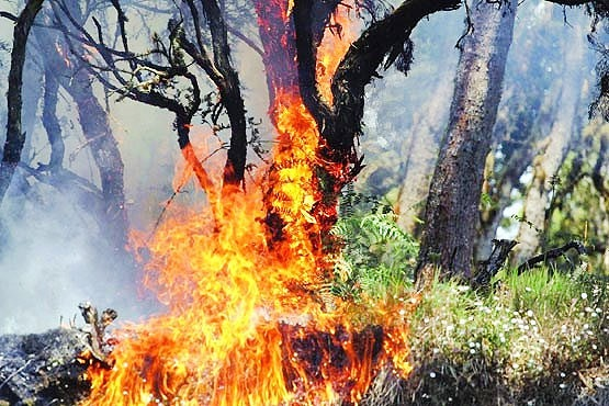 مهار آتش جنگل مرزن آباد نیازمند بالگرد است