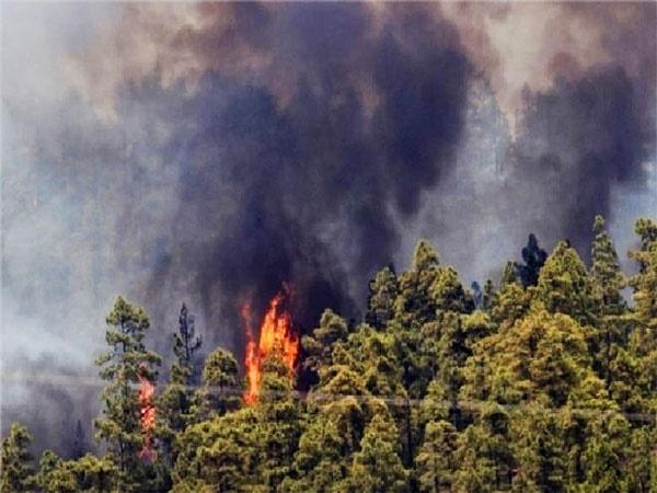 افزایش امید به مهار آتشسوزی جنگلهای گیلان
