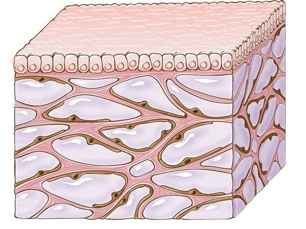 کشف شبکه جدید در بدن انسان