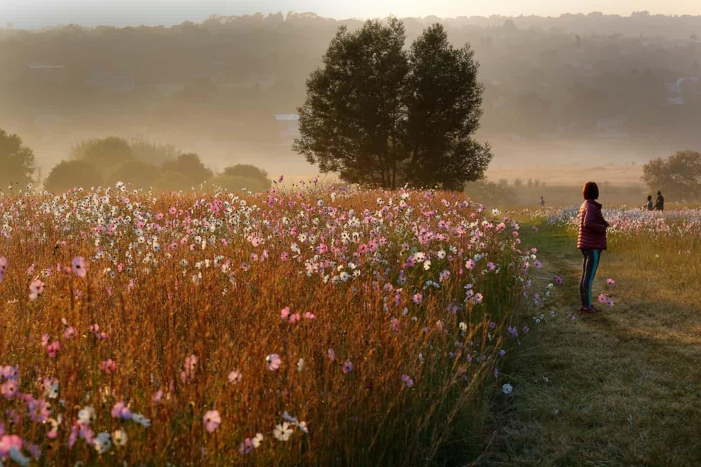 عکس روز: پاییز آفریقای جنوبی