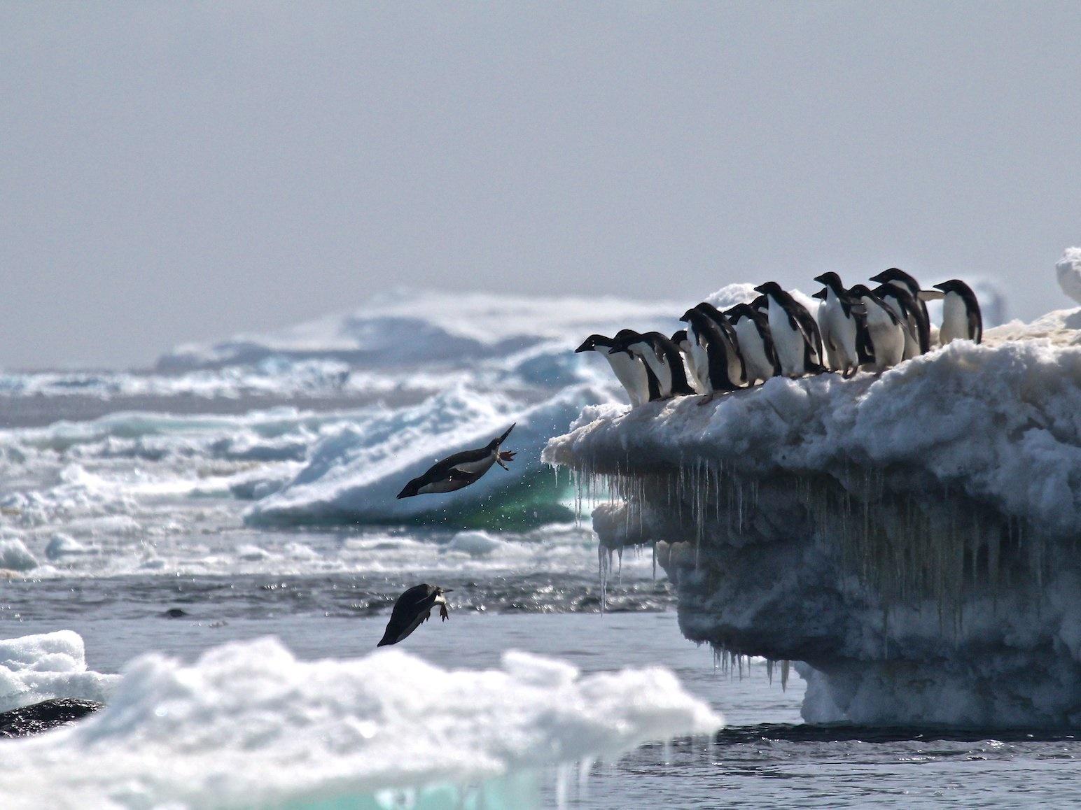 کشف کلانشهر پنهانی پنگوئنها در دورافتادهترین نقطه از جنوبگان