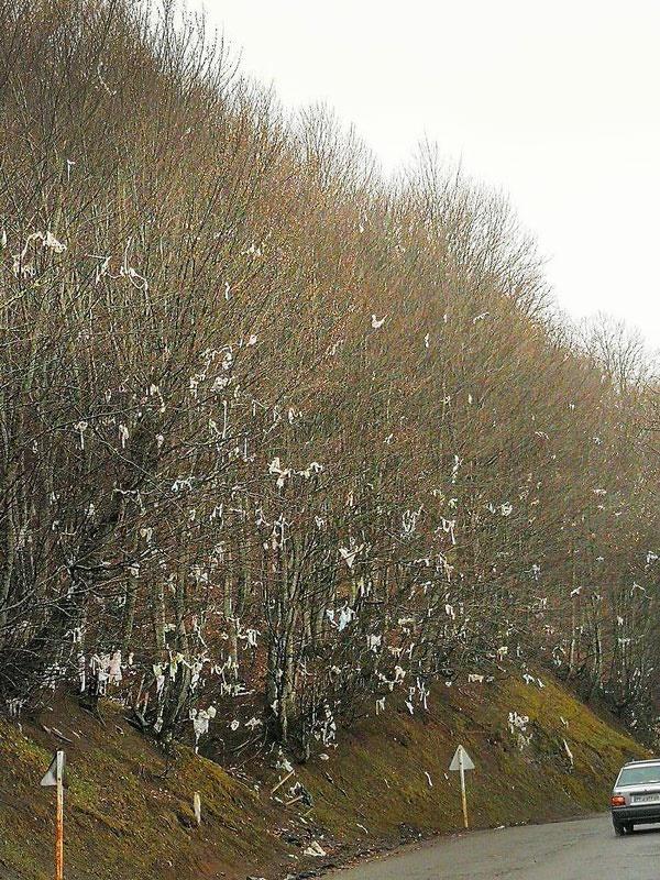 درخت پلاستیک؛ تولید نوروزی مسافران