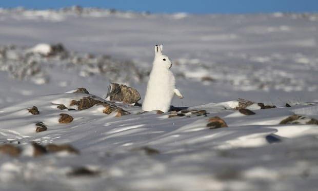 بهار زودرس در قطب شمال
