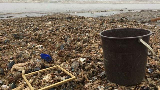 تلف شدن جانداران دریایی در پی سرمای شدید انگلیس