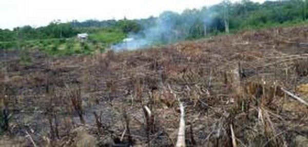 تشدید بحران جنگلزدایی در استرالیا