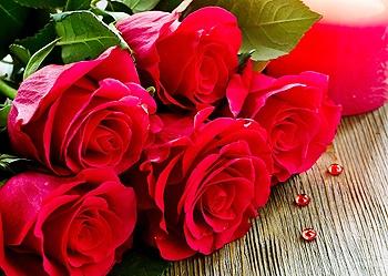 گل رز؛ شاخهای ۱۱ هزار تومان