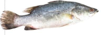 ماهی شب عید طعم گرانی نمیگیرد