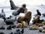 قانون جدید شیلی برای حفاظت از آبهای ساحلی