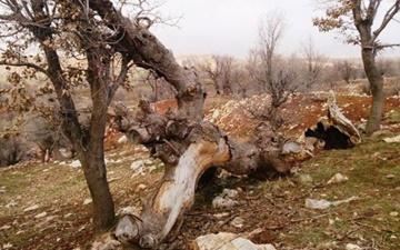 انقراض گونههای حیات وحش سبب نابودی جنگلها میشود