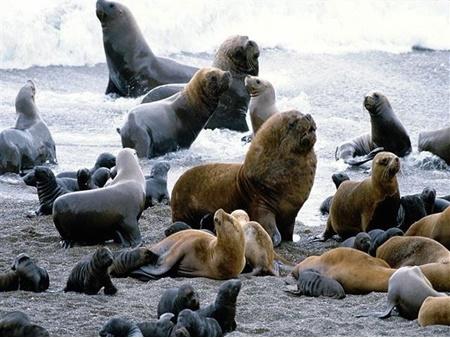 قانون جدید شیلی برای حفاظت از آب های ساحلی