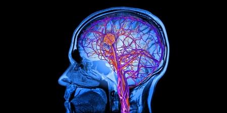 تلاش برای ذخیره سازی اطلاعات مغز توسط شرکتی نوپا