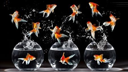 ماهی,محیط زیست جهان,نوروز ۹۷