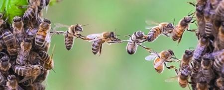 شباهت رفتاری گروه زنبورهای عسل به مغز انسان؛ هرزنبور یک نورون