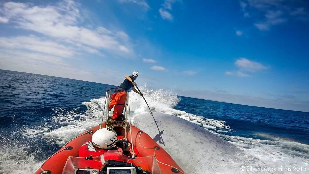 عکس روز | نصب تگ بر نهنگ