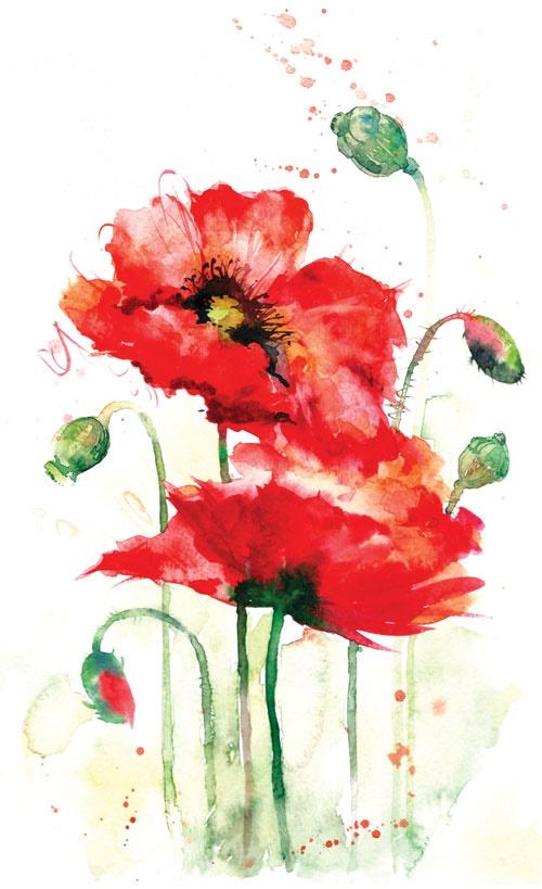 گل سرخی که بر قله روییدهاست