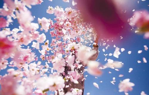 بهاریهی گل و گلاب در باغ گیاهشناسی