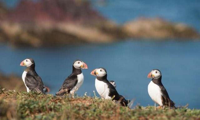 یک هشتم پرندههای جهان در معرض خطر انقراض