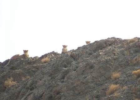 خروج بیش از ۵۵۰۰ دام اهلی از پارک ملی توران