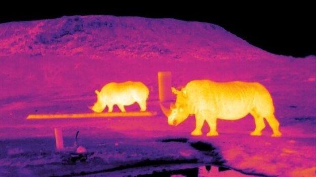 استفاده از فناوری نجومی برای محافظت از گونههای درحال انقراض