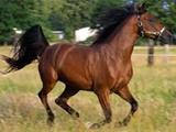 تصاویر | اسب به نماینده مرند و جلفا در مجلس سواری نداد و او را به زمین کوبید
