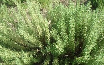 ۲ هزار گونه گیاهی ایران در خطر انقراض قرار دارد