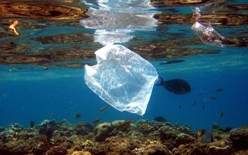 پلاستیکهای غوطهور در دریا حامل باکتریهای خطرناک هستند