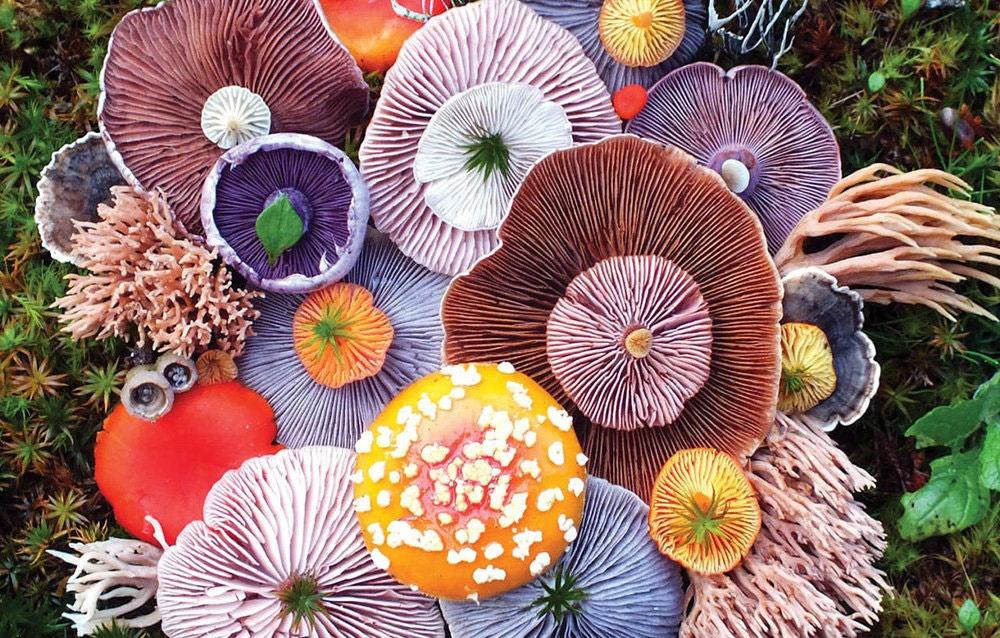هشدار جدی در خصوص استفاده از قارچها و گیاهان خودرو