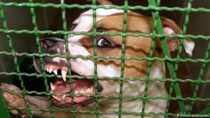 یک نژادپرست آلمانی سگهای جنگی خود را به جان پناهجویان سوری انداخت