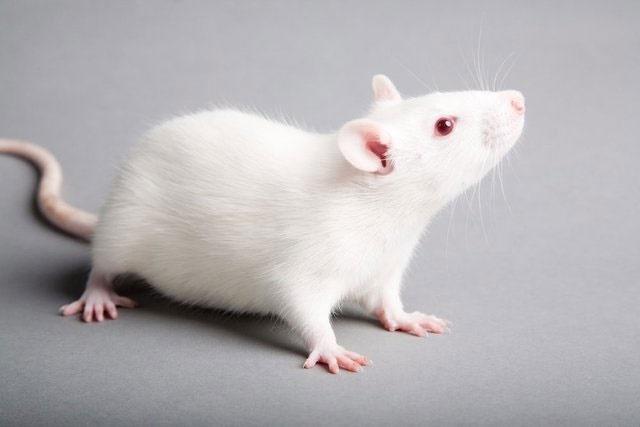 تاثیر آلودگی هوا بر تغییرات ژنی مغز موش