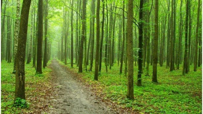 """تاثیر """"حال خوب"""" بر توسعه جنگلهای جهان"""
