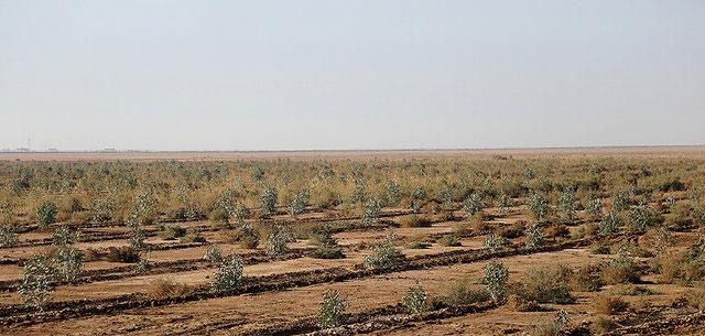 نهالهای کشتشده در کانونهای ریزگرد خوزستان تشنه آب هستند