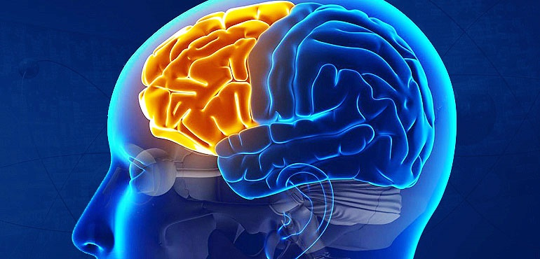 مجله مغز