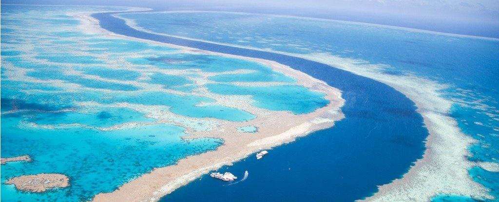 فرار چندباره دیوار بزرگ مرجانی از مرگ طی ۳۰ هزار سال