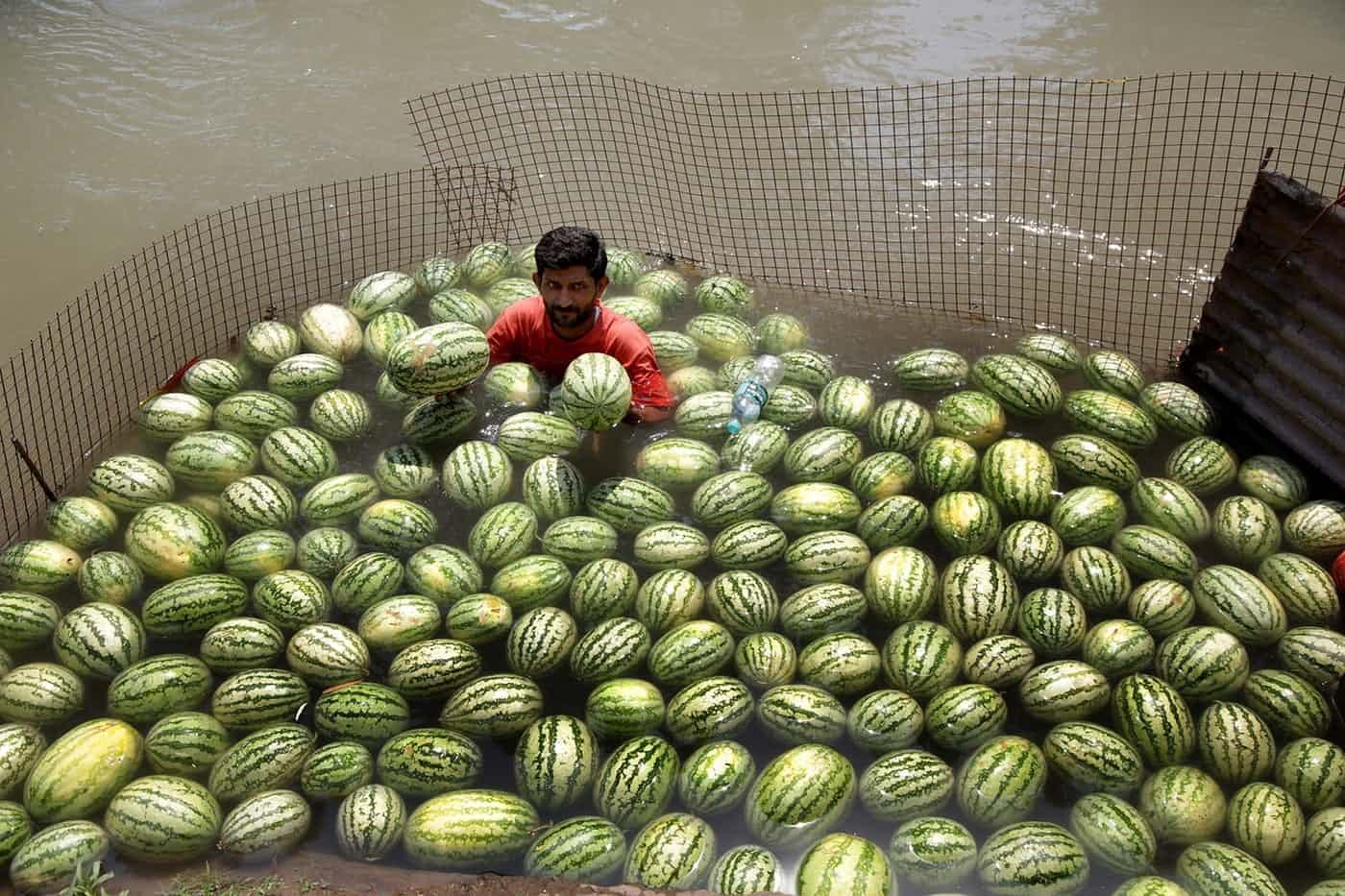 عکس روز: خنک شدن همراه هندوانهها