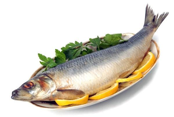 مصرف ماهی موجب افزایش قدرت باروری میشود