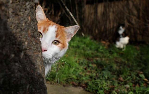 حیوانات شهری نباید با انسانها اخت پیدا کنند