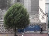وزش باد شدید در تهران/هوای پایتخت سالم است