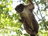 استفاده از فناوری تشخیص چهره برای نجات گونههای درحال انقراض