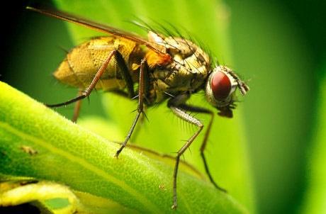 حشرات ۵۰ درصد تنوع زیستی هر منطقه را تشکیل میدهند