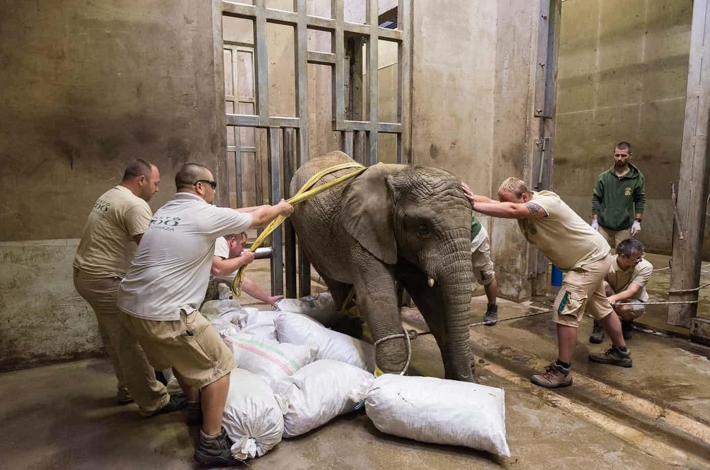 عکس روز: فیل درمانی